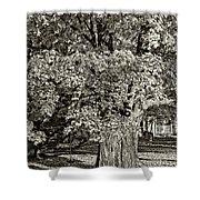 The Swinging Tree Sepia Shower Curtain
