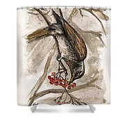 The Thrush Eating Cranberries Shower Curtain