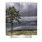 The Thunder Rolls - Storm - Pine Tree Shower Curtain by Jason Politte