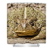 The Toad Shower Curtain