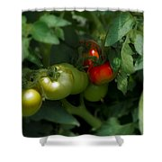 The Tomato Plant Shower Curtain
