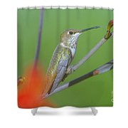 The Tongue Of A Humming Bird  Shower Curtain