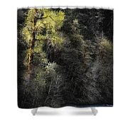 The Tree Across The River Shower Curtain