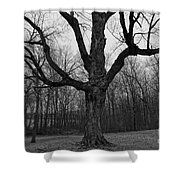 The Tree In The Park Shower Curtain