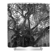 The Tree Vines Shower Curtain