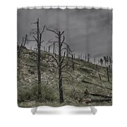 The Trees That Were Shower Curtain