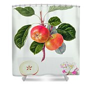 The Trumpington Apple Shower Curtain by William Hooker