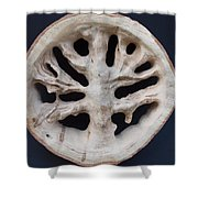 The Trunk Of Time Shower Curtain