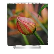 The Tulip Bud Shower Curtain