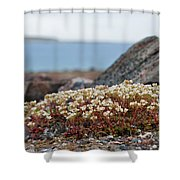 The Tundra... Shower Curtain