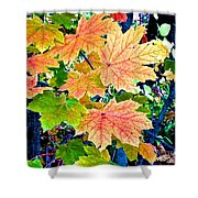 The Turning Leaves Shower Curtain