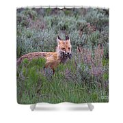 The Two-fer Shower Curtain