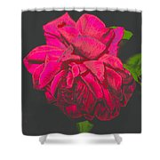 The Ultimate Red Rose Shower Curtain