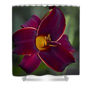 The Unsurpassable Daylily Shower Curtain