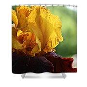 The Velvet Iris Shower Curtain
