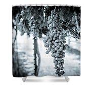 The Vineyard   Bw Shower Curtain