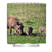 The Warthog Family On Savannah In The Ngorongoro Crater. Tanzania Shower Curtain