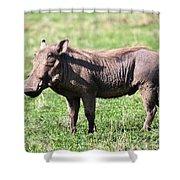 The Warthog On Savannah In The Ngorongoro Crater. Tanzania Shower Curtain