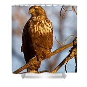 The Watcher In The Woods Shower Curtain
