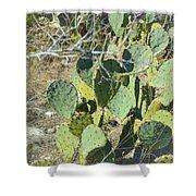 Cedar Park Texas Prickly Pear Cactus Shower Curtain