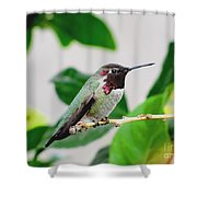 The Watchman On Duty Shower Curtain