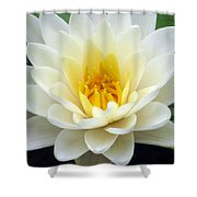 The Water Lilies Collection - 03 Shower Curtain