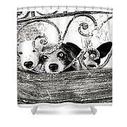 The Welcoming  Shower Curtain