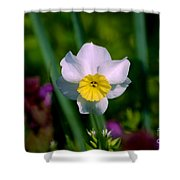 The White And Yellow Daffodil Shower Curtain