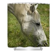 The White Mare  Shower Curtain