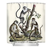 The White-nosed Monkey Shower Curtain