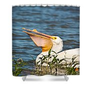 The White Pelican Shower Curtain
