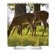 The Whitetail Deer Of Mt. Nebo - Arkansas Shower Curtain