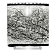 The Wicked Trees Shower Curtain