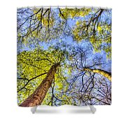 The Wild Forest Shower Curtain