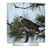 The Wild Osprey Shower Curtain