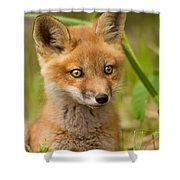 The Wild Pup Shower Curtain
