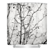 The Winter Pear Tree In Black And White Shower Curtain
