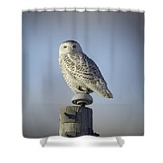 The Wise Snowy Owl Shower Curtain