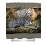 The Wolfhound  Shower Curtain