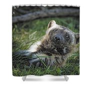 The Wolverine Skunk Bear Happy Face Shower Curtain