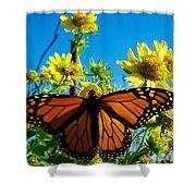 The Wonderful Monarch 3 Shower Curtain