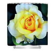 The Yellow Rose Palm Springs Shower Curtain