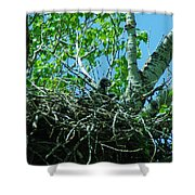 The Young Eaglet Peaks Out  Shower Curtain