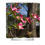 Them Cheery Little Dogwoods Shower Curtain