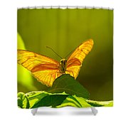 Then A Butterfly Shower Curtain