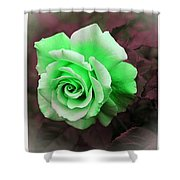 There Were Roses Triptych Shower Curtain
