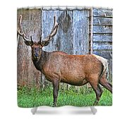 There's An Elk By The Barn Shower Curtain