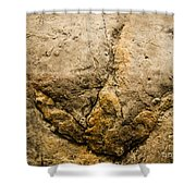 Theropod Dinosaur Footprint Shower Curtain
