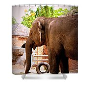 They All Ask'd For You Shower Curtain