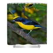 Thick-billed Euphonia Shower Curtain